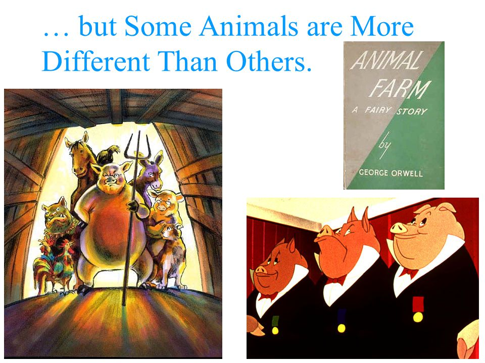… but Some Animals are More Different Than Others.