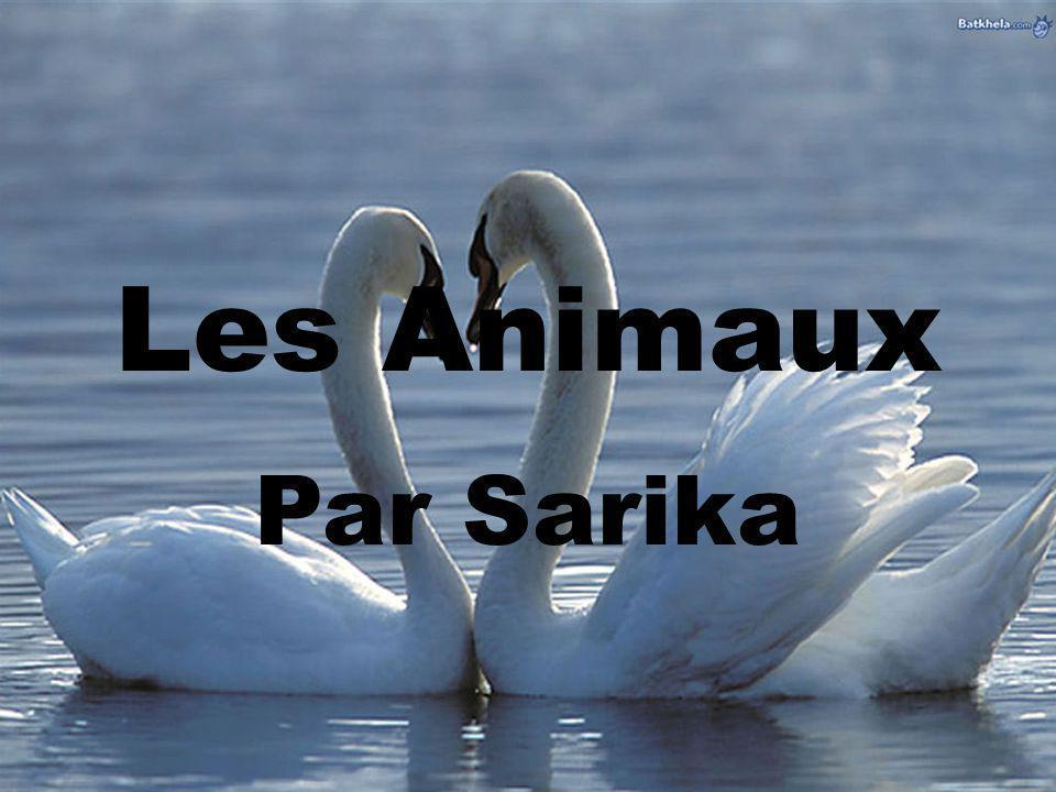 Les Animaux Par Sarika