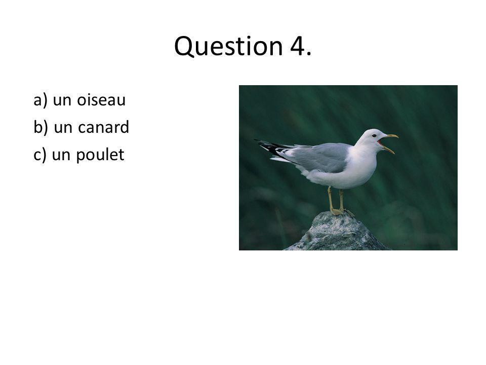 Question 4. a) un oiseau b) un canard c) un poulet