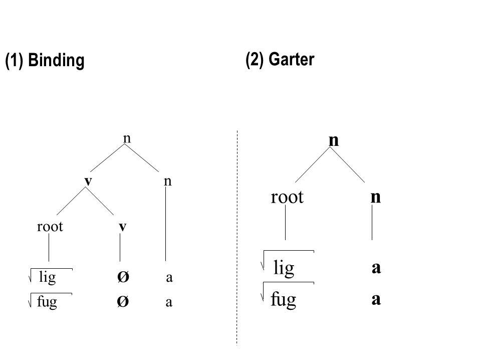 v v root n n Ø liga Ø fuga n n root lig a fug a (1) Binding (2) Garter