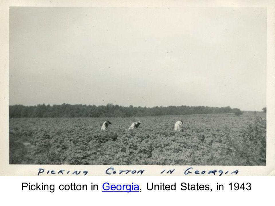 Picking cotton in Georgia, United States, in 1943Georgia