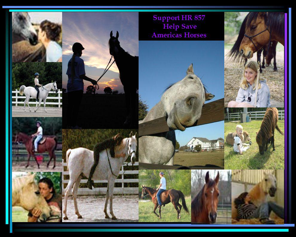 Support HR 857 Help Save Americas Horses