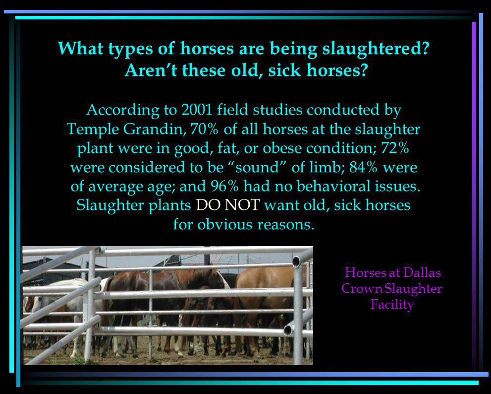 What types of horses are being slaughtered. Arent these old, sick horses.