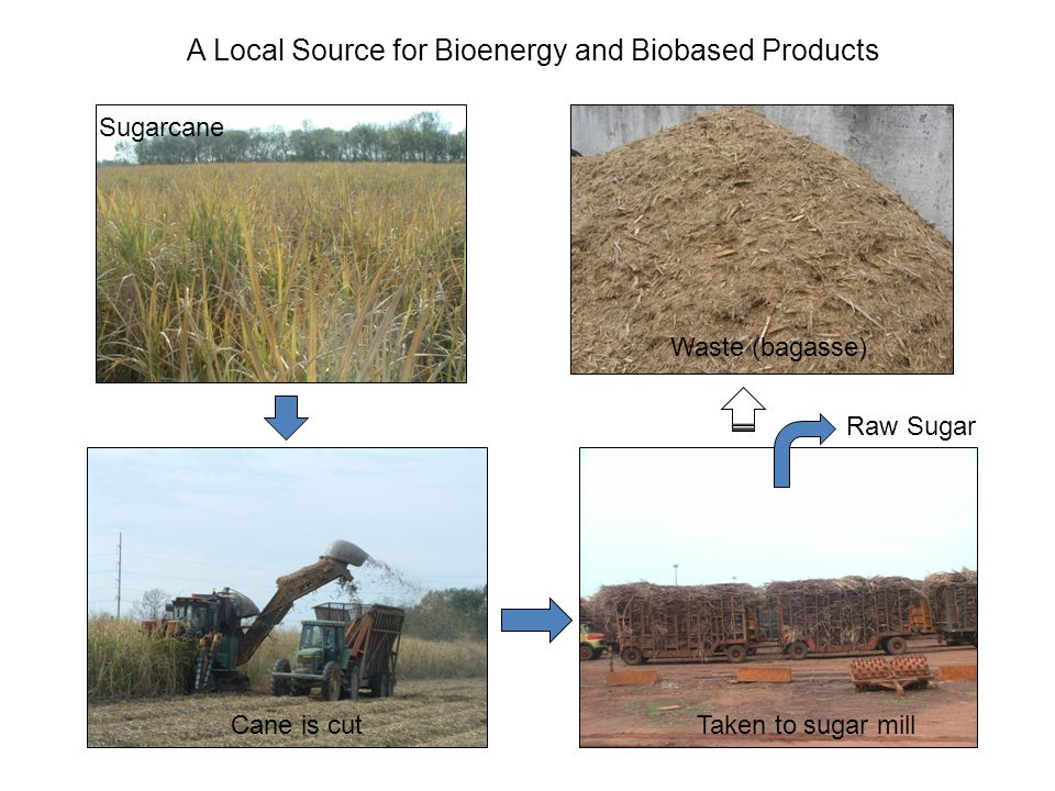 Biorefinery Concept for the Production of Bioenergy and Biobased Products at the Audubon Sugar Institute