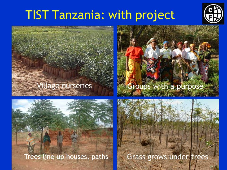 TIST Tanzania: with project Village nurseries Groups with a purpose Trees line up houses, paths Grass grows under trees