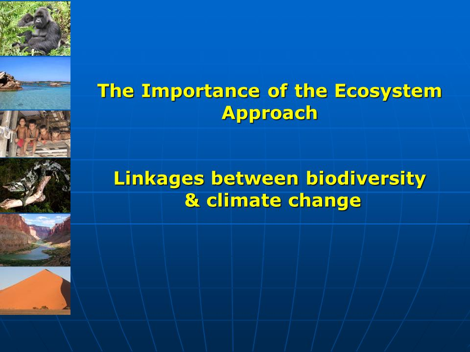 The Importance of the Ecosystem Approach Linkages between biodiversity & climate change