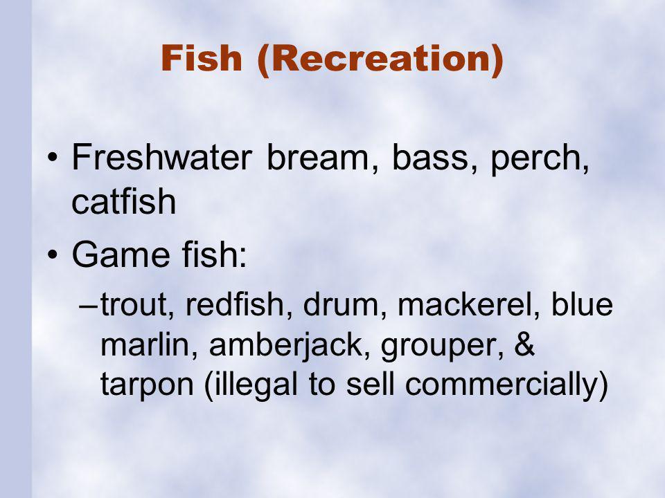 Fish (Recreation) Freshwater bream, bass, perch, catfish Game fish: –trout, redfish, drum, mackerel, blue marlin, amberjack, grouper, & tarpon (illega