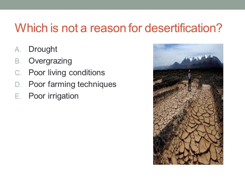 Which is not a reason for desertification? A. Drought B. Overgrazing C. Poor living conditions D. Poor farming techniques E. Poor irrigation