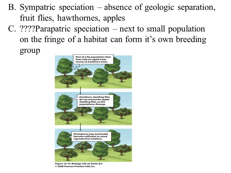 B.Sympatric speciation – absence of geologic separation, fruit flies, hawthornes, apples C.????Parapatric speciation – next to small population on the