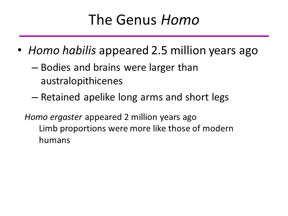 The Genus Homo Homo habilis appeared 2.5 million years ago – Bodies and brains were larger than australopithicenes – Retained apelike long arms and sh