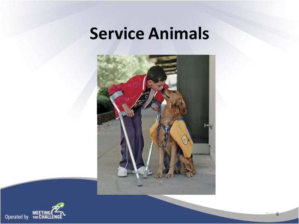 Laws that Impact Service Animals Rehabilitation Act of 1973 Fair Housing Act Air Carrier Access Act Individuals with Disabilities Education Act (IDEA) ADA The definition and animal inclusiveness varies depending on what law applies.