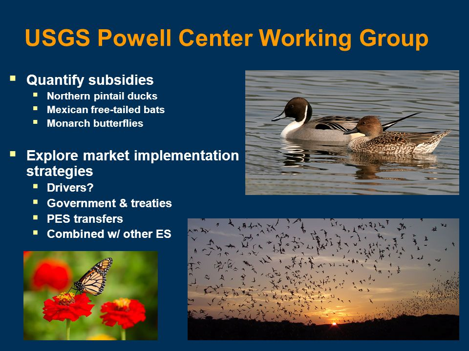 USGS Powell Center Working Group Quantify subsidies Northern pintail ducks Mexican free-tailed bats Monarch butterflies Explore market implementation strategies Drivers.
