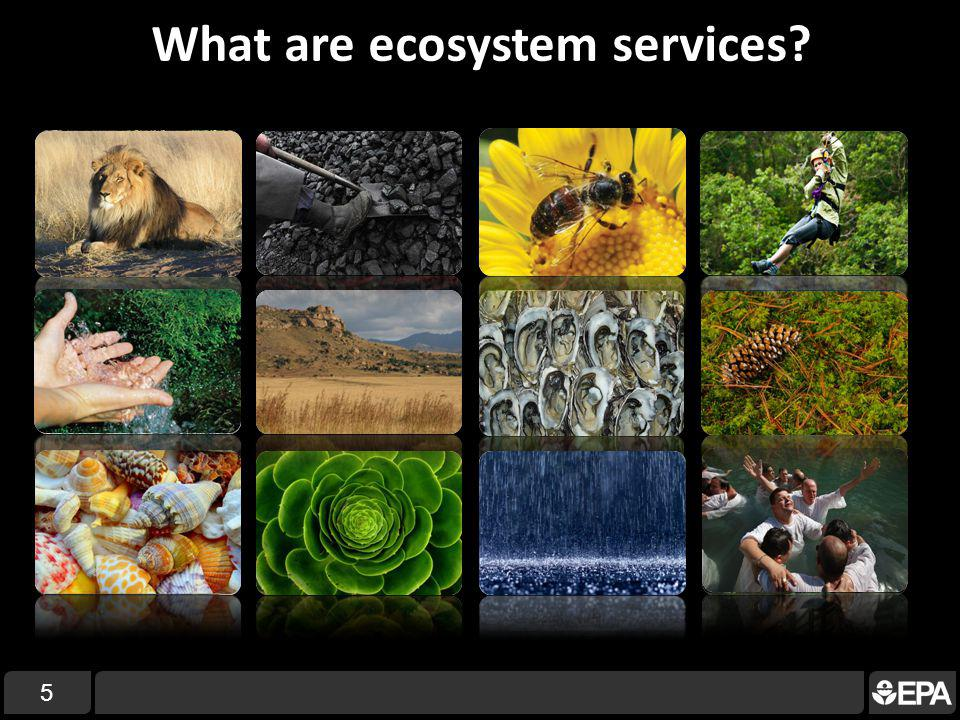 What are ecosystem services 5