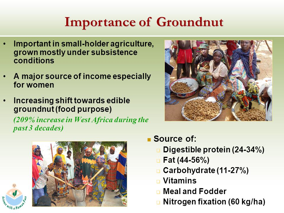 Important in small-holder agriculture, grown mostly under subsistence conditions A major source of income especially for women Increasing shift towards edible groundnut (food purpose) (209% increase in West Africa during the past 3 decades) Source of: Digestible protein (24-34%) Fat (44-56%) Carbohydrate (11-27%) Vitamins Meal and Fodder Nitrogen fixation (60 kg/ha) Importance of Groundnut