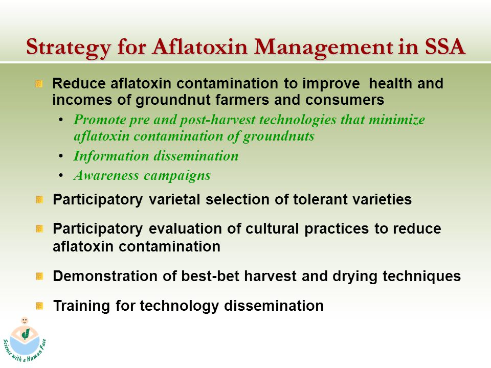 Strategy for Aflatoxin Management in SSA Reduce aflatoxin contamination to improve health and incomes of groundnut farmers and consumers Promote pre and post-harvest technologies that minimize aflatoxin contamination of groundnuts Information dissemination Awareness campaigns Participatory varietal selection of tolerant varieties Participatory evaluation of cultural practices to reduce aflatoxin contamination Demonstration of best-bet harvest and drying techniques Training for technology dissemination