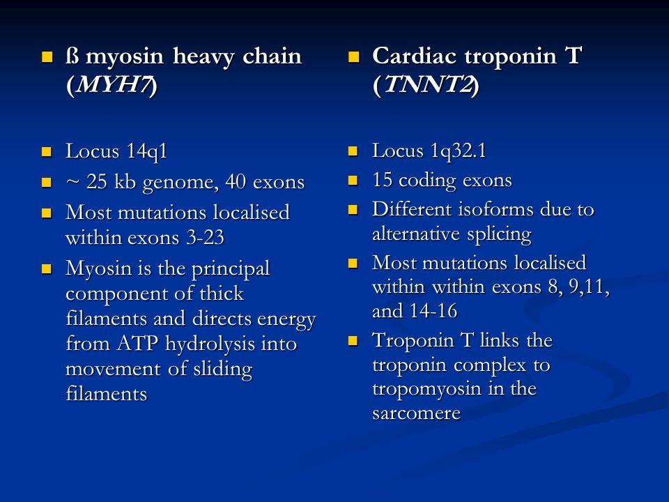 ß myosin heavy chain (MYH7) ß myosin heavy chain (MYH7) Locus 14q1 Locus 14q1 ~ 25 kb genome, 40 exons ~ 25 kb genome, 40 exons Most mutations localis