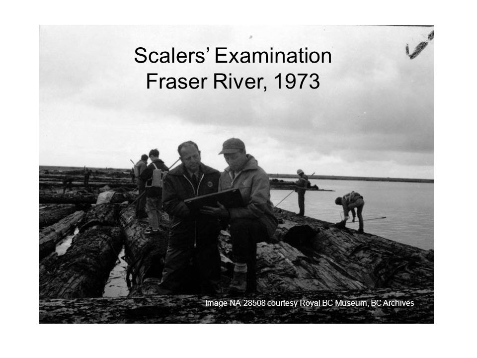 Scalers Examination Fraser River, 1973 Image NA courtesy Royal BC Museum, BC Archives