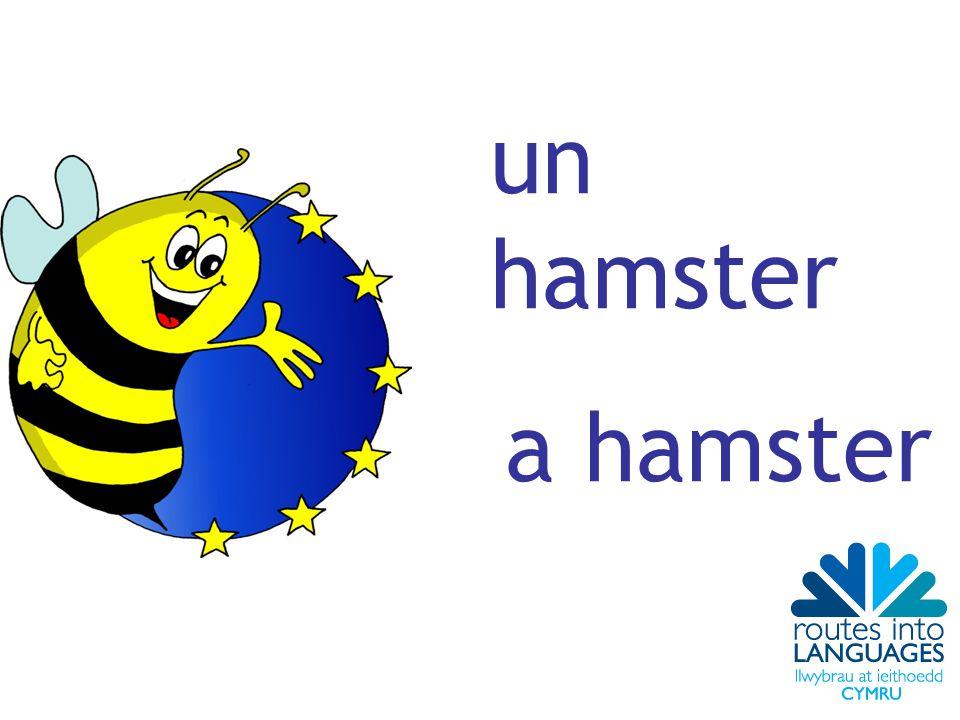un hamster a hamster