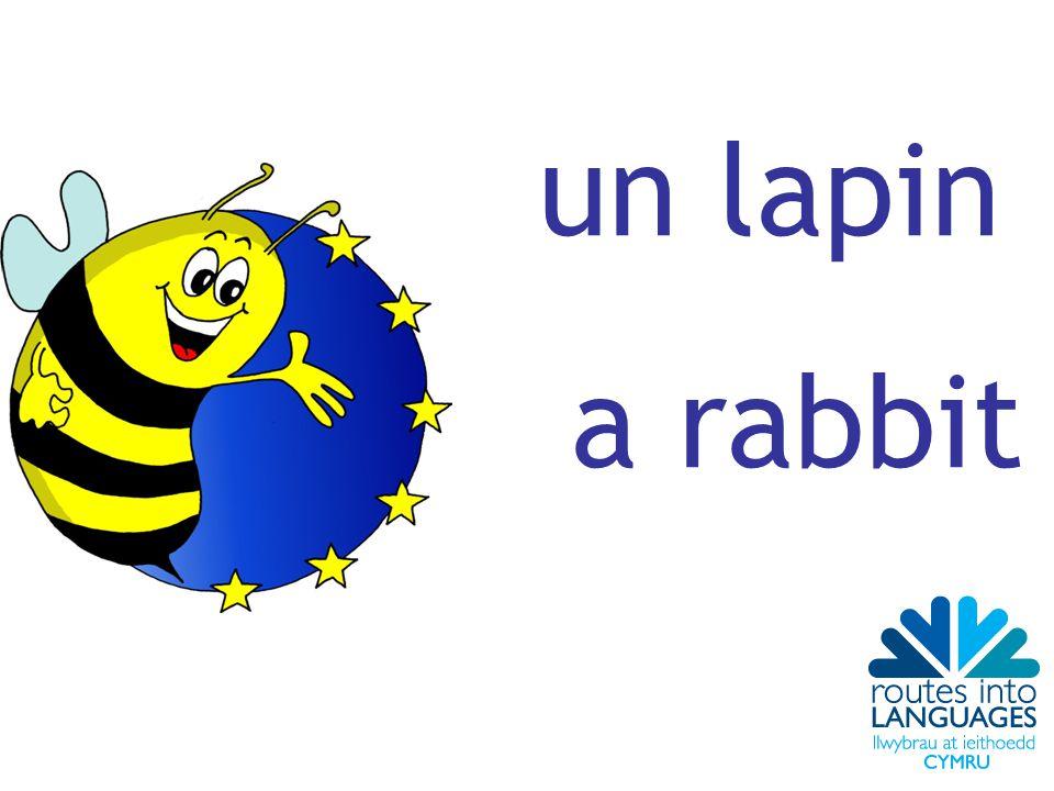 un lapin a rabbit