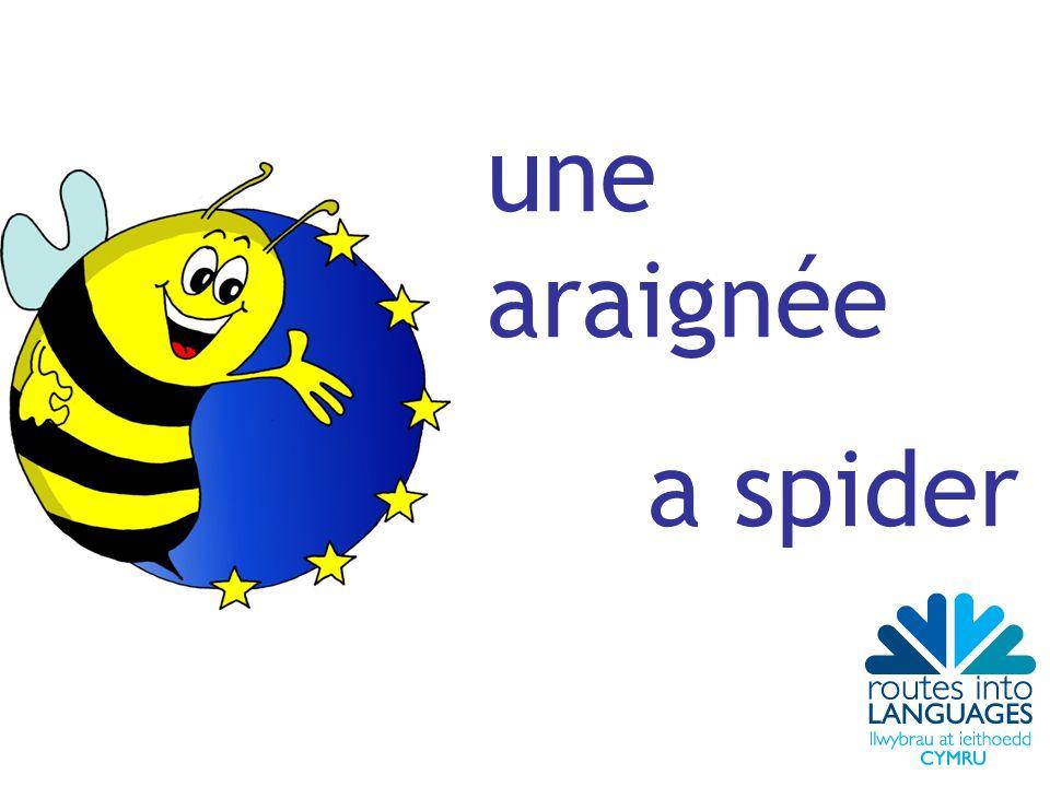 une araignée a spider