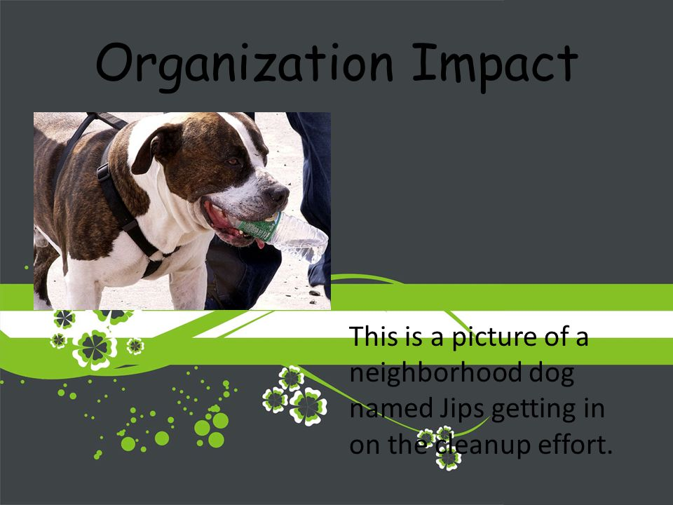Organization Impact This is a picture of a neighborhood dog named Jips getting in on the cleanup effort.