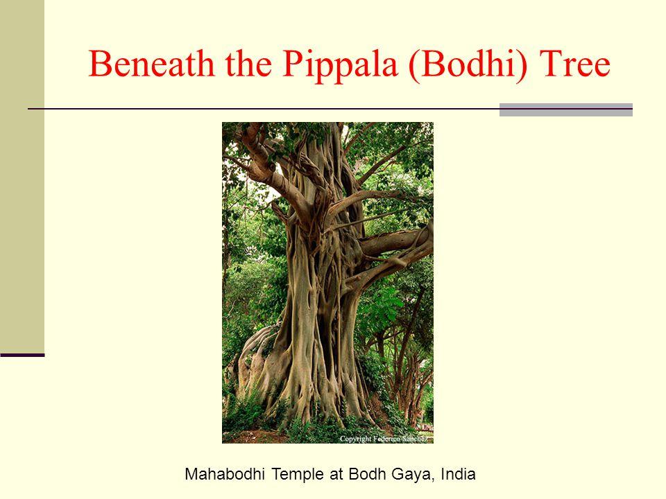 Beneath the Pippala (Bodhi) Tree Mahabodhi Temple at Bodh Gaya, India