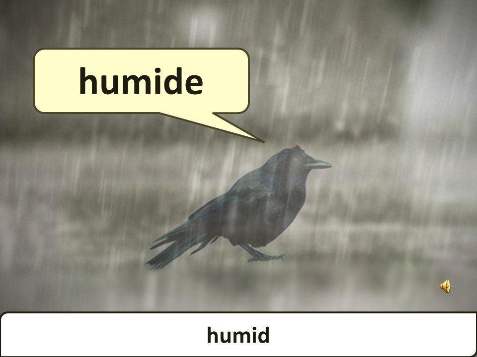 rainy pluvieux