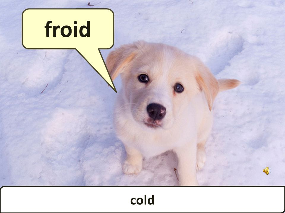 cold froid