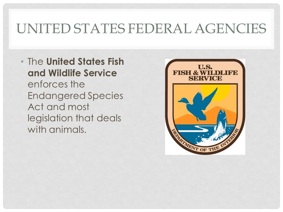 UNITED STATES FEDERAL AGENCIES The United States Fish and Wildlife Service enforces the Endangered Species Act and most legislation that deals with an