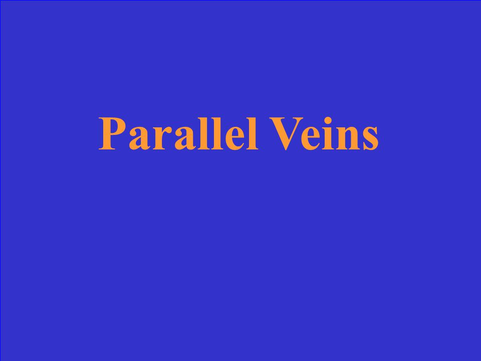 Equal veins, with inconspicuous branching between the veins