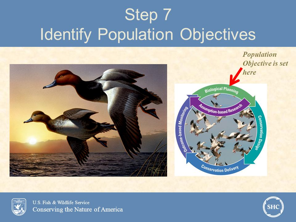 U.S. Fish & Wildlife Service Conserving the Nature of America Step 7 Identify Population Objectives Population Objective is set here