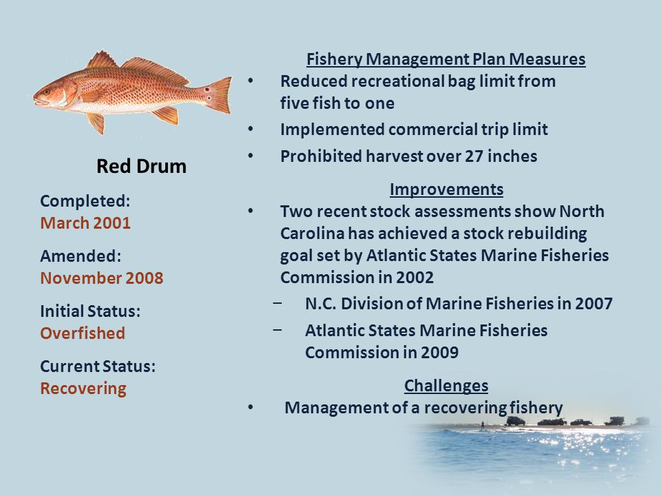Red Drum Completed: March 2001 Amended: November 2008 Initial Status: Overfished Current Status: Recovering Fishery Management Plan Measures Reduced recreational bag limit from five fish to one Implemented commercial trip limit Prohibited harvest over 27 inches Improvements Two recent stock assessments show North Carolina has achieved a stock rebuilding goal set by Atlantic States Marine Fisheries Commission in 2002 N.C.