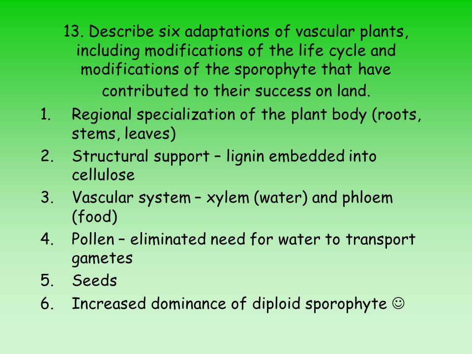 13. Describe six adaptations of vascular plants, including modifications of the life cycle and modifications of the sporophyte that have contributed t