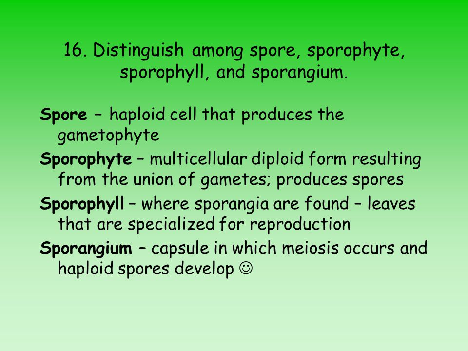 16.Distinguish among spore, sporophyte, sporophyll, and sporangium.