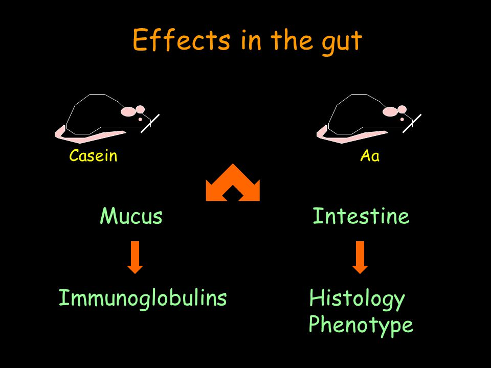.. IntestineMucus Immunoglobulins Histology Phenotype Effects in the gut CaseinAa
