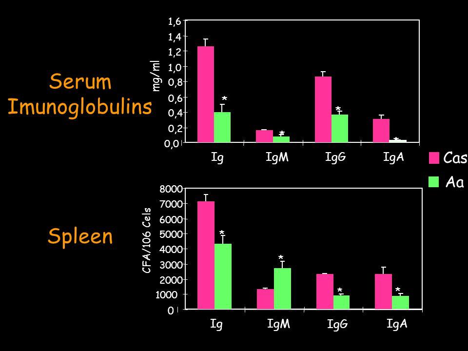 Serum Imunoglobulins 0,0 0,2 0,4 0,6 0,8 1,0 1,2 1,4 1,6 IgIgMIgGIgA mg/ml Cas Aa * * * * Spleen 0 1000 2000 3000 4000 5000 6000 7000 8000 IgIgM IgG IgA CFA/106 Cels * * * *