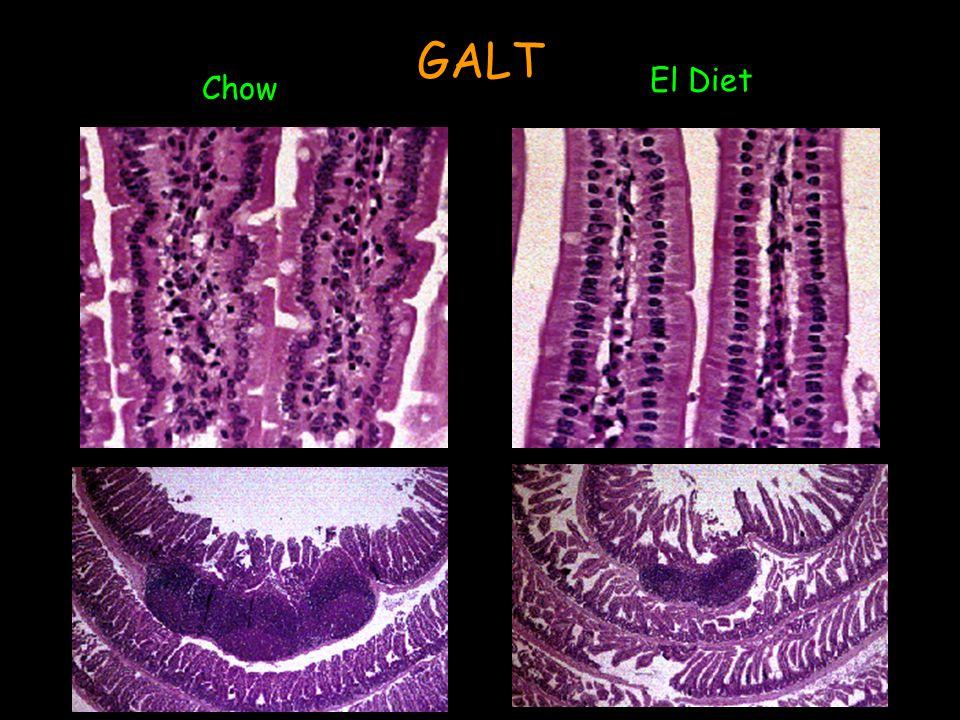 GALT Chow El Diet