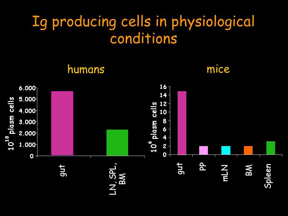 .. IntestineMucus Immunoglobulins Histology Phenotype Effects in the gut CaseinAa
