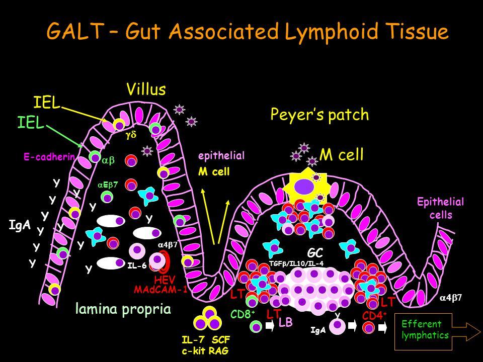 C57BL/6 BALB/c Cas Aa In vitro production of IL-4 & IL-10 0 3000 6000 9000 SplpLNcLN 0 4000 8000 12000 SplpLNPP pg/ml mLN 0 10000 20000 30000 SplpLNcLN 0 15000 30000 45000 SpleenpLN pg/ml mLN