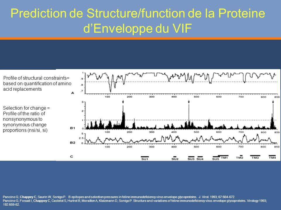 Prediction de Structure/function de la Proteine dEnveloppe du VIF Pancino G, Chappey C, Saurin W, Sonigo P.