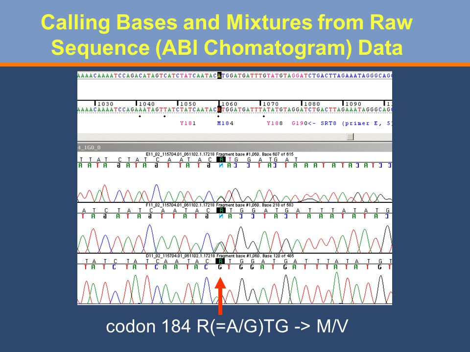codon 184 R(=A/G)TG -> M/V Calling Bases and Mixtures from Raw Sequence (ABI Chomatogram) Data