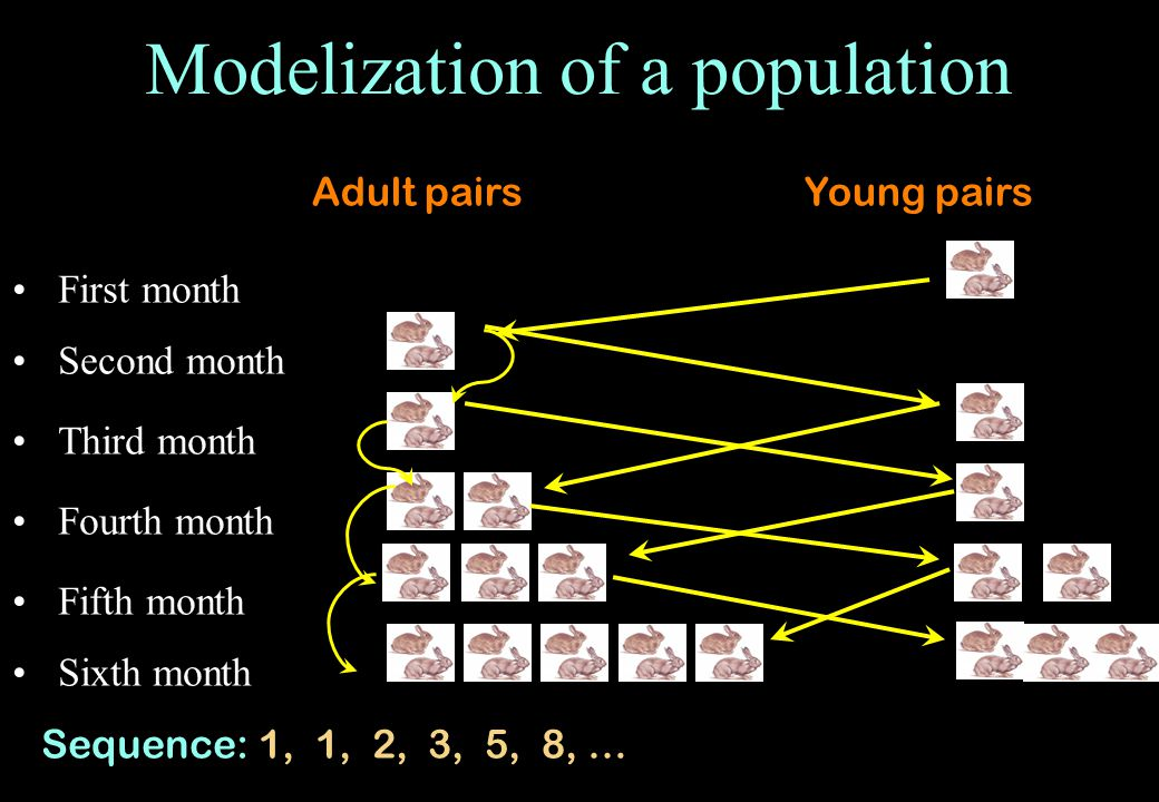 Modelization of a population First month Third month Fifth month Sixth month Second month Fourth month Adult pairsYoung pairs Sequence: 1, 1, 2, 3, 5, 8, …