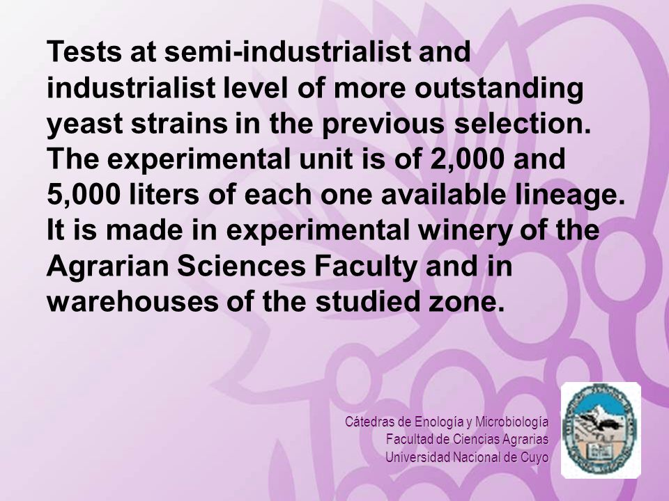Tests at semi-industrialist and industrialist level of more outstanding yeast strains in the previous selection. The experimental unit is of 2,000 and