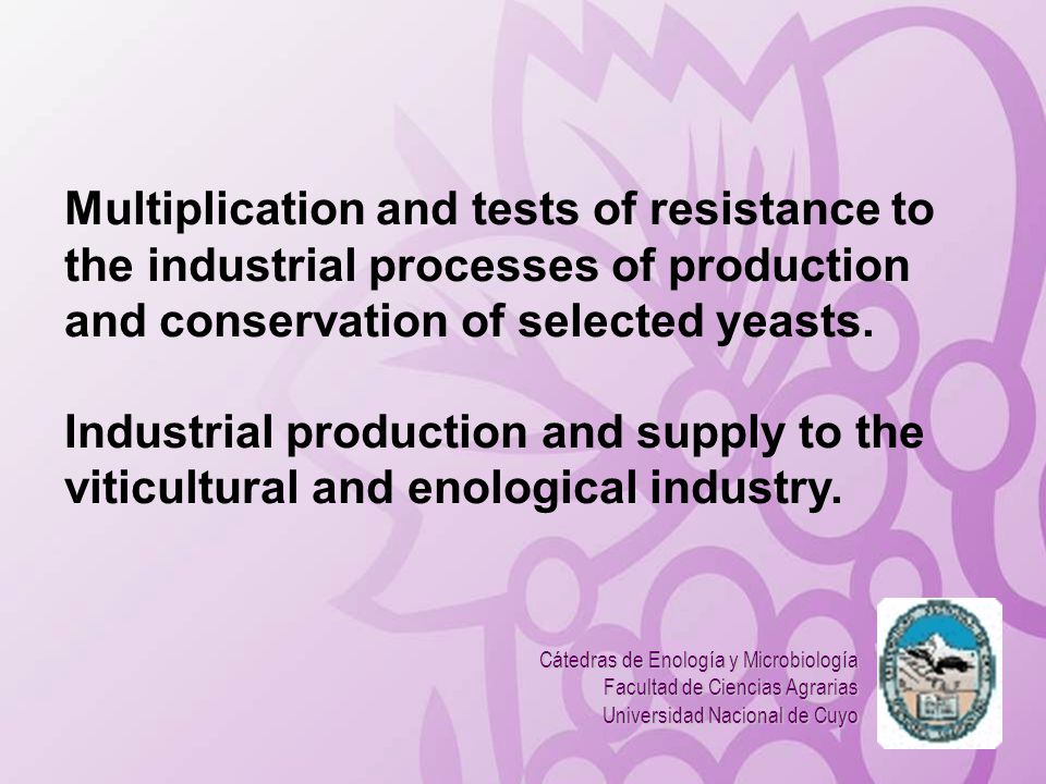 Multiplication and tests of resistance to the industrial processes of production and conservation of selected yeasts. Industrial production and supply