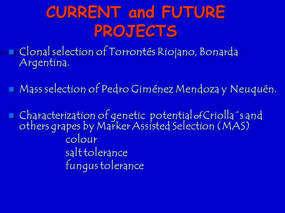 n Clonal selection of Torrontés Riojano, Bonarda Argentina. n Mass selection of Pedro Giménez Mendoza y Neuquén. n Characterization of genetic potenti