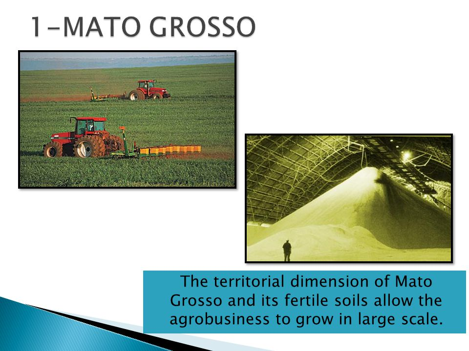 The territorial dimension of Mato Grosso and its fertile soils allow the agrobusiness to grow in large scale.