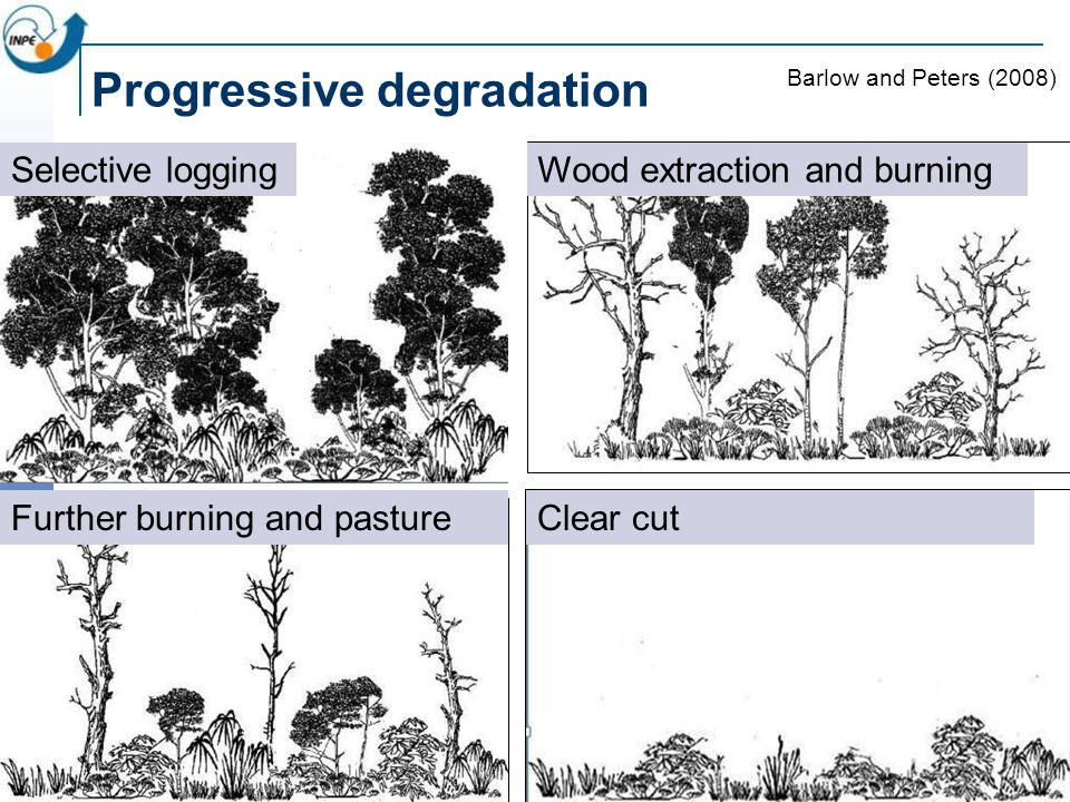 Progressive degradation Wood extraction and burningSelective logging Further burning and pasture Barlow and Peters (2008) Clear cut