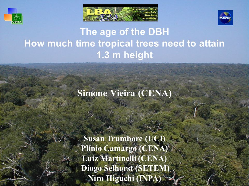 The age of the DBH How much time tropical trees need to attain 1.3 m height Simone Vieira (CENA) Susan Trumbore (UCI) Plínio Camargo (CENA) Luiz Martinelli (CENA) Diogo Selhorst (SETEM) Niro Higuchi (INPA)