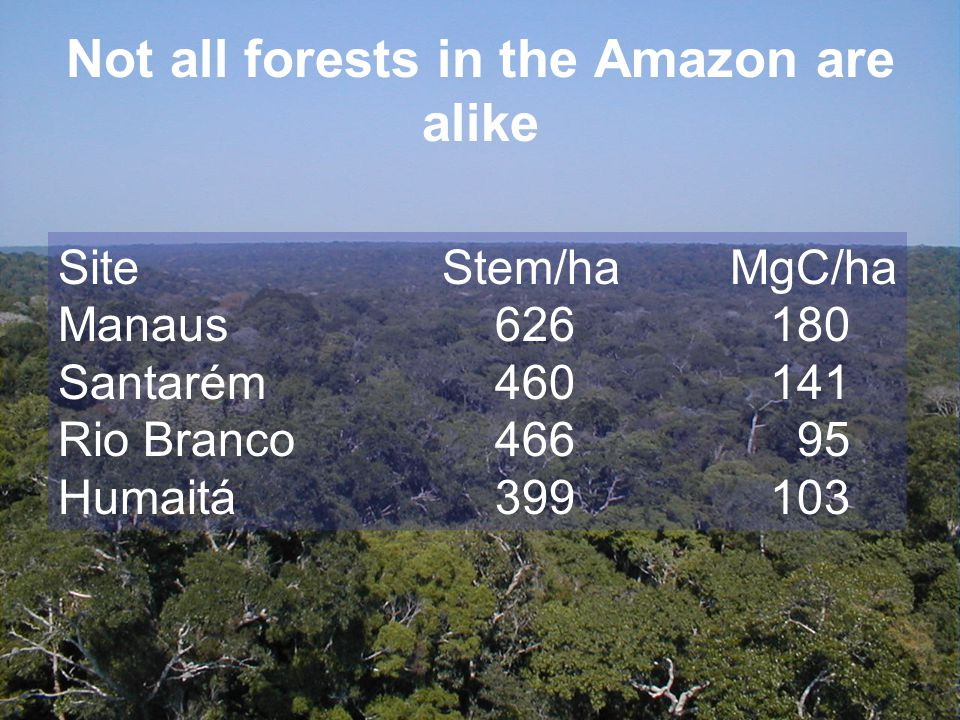 Not all forests in the Amazon are alike SiteStem/haMgC/ha Manaus 626 180 Santarém 460 141 Rio Branco 466 95 Humaitá 399 103