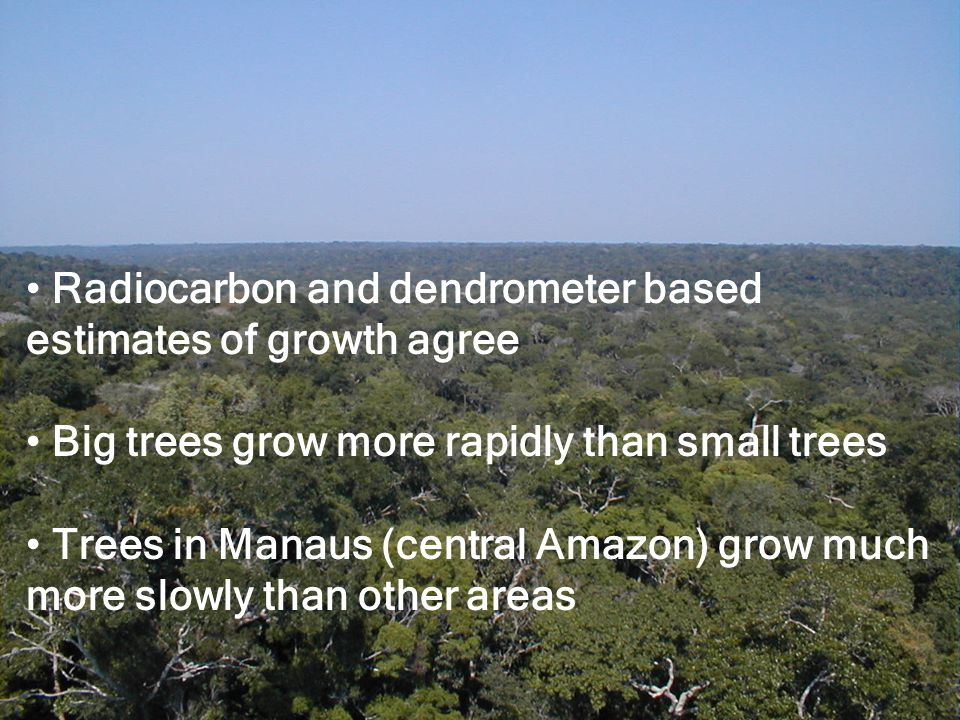 Radiocarbon and dendrometer based estimates of growth agree Big trees grow more rapidly than small trees Trees in Manaus (central Amazon) grow much more slowly than other areas